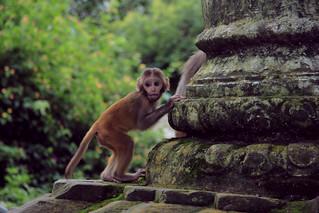 Monkey Temple, Katmandú