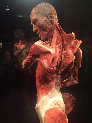 Body Worlds: Vital