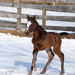 2014 Hartbreak filly