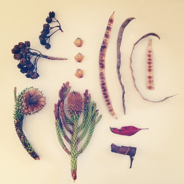 Gatherings collected on our wanderings today. Finding beauty in the side streets and on the footpaths. Inspired by @petalplum #gathered #nature #collection