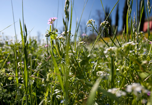 Di fiori e altri sguardi