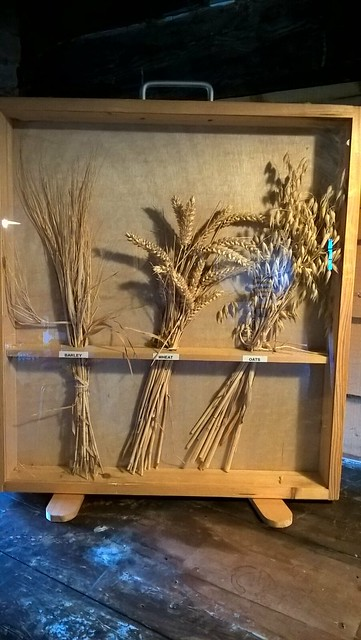 Barley, wheat, oats