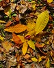 Grounded Autumn Leaves