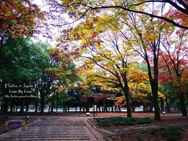 日本東京景點澀谷區代代木公園賞楓葉 (7)