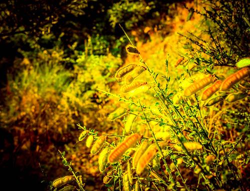 trees winter light bw sun sunrise river landscape licht und sonnenuntergang laub herbst olympus josef fluss landschaft sonne blätter rhein weiss bäume schwarz wege lahnstein atumn kurzentrum epl3 sejrek budbrainde