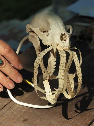 Terry Ann Carter's Skull Book