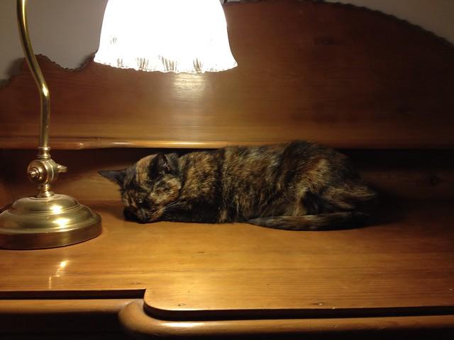 Artemis cat bedtime
