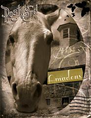 AmadeusPostCard