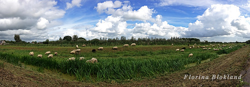 schapen panorama 1500 by edufloortje