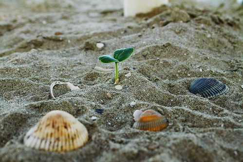 La forza della vita. by Claudio61 una foto ferma un ricordo nel tempo
