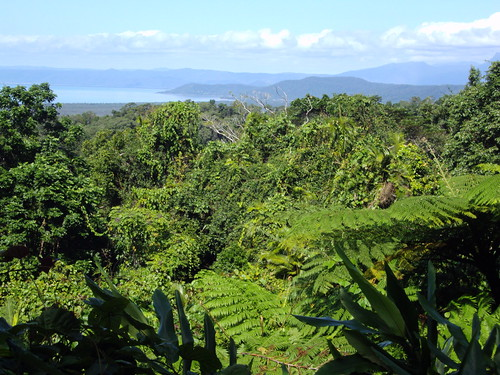 View across the Daintree national park in Queensland near Cape Tribulation.
