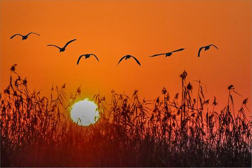 bird nature landscape southafrica interestingness wildlife johannesburg avian excellence gauteng naturesfinest sept2 mywinners anawesomeshot superaplus aplusphoto canon400mmf4 avianexcellence flickrfrank1 flickrfrank2 canon650d rebelt4i