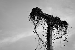 Exilado da rede (Cuiabá, MT, Brasil)