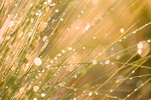 morning usa sun sc water grass sunrise reeds us droplets drops unitedstates bokeh unitedstatesofamerica southcarolina places dew flare marsh locations kiawahisland lowcountry ef70200f4lusm