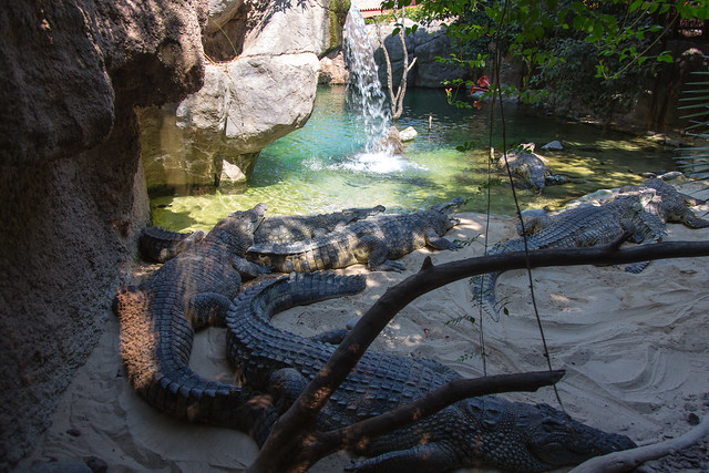 Bioparc Fuengirola Niilin krokotiili Nile crocodile
