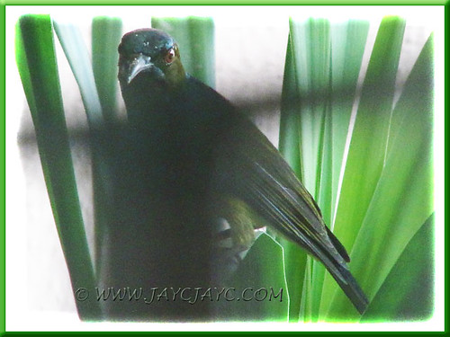 Sunbird, resting on our grill gate - Sept 30 2013