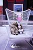 珠山50號民宿(依山行館)小咖啡狗與小黃狗也愛這閒適快意