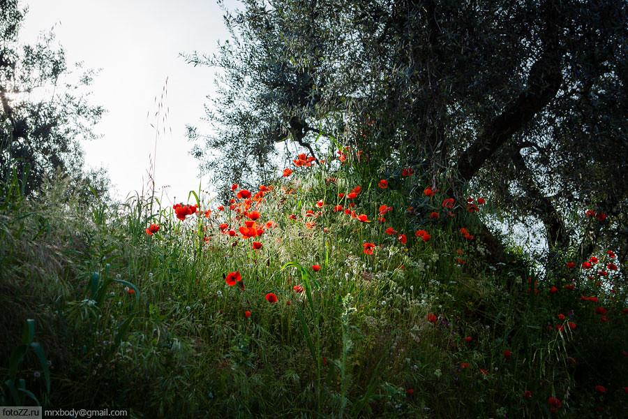 13-Tuscany