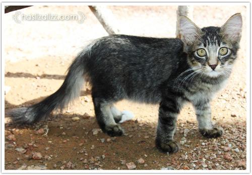 10988688965 7bda380670 o kucing kesayangan nenek