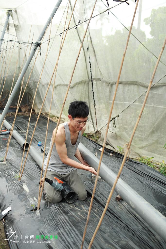 綠翠微農場 (4)