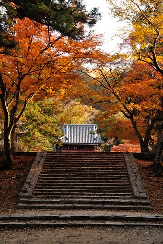 A autumnal scene of Tamukeyama-hachimangu Shrine.