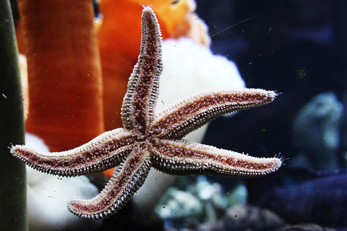 starfish-crop