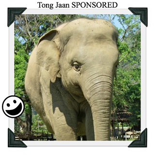 Tong Jaan SPONSORED - Five
