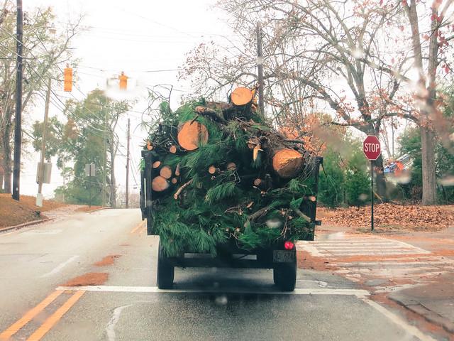 336.365 {Christmas Trees?}