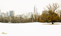 weisser_photography_1st Snow Dec-