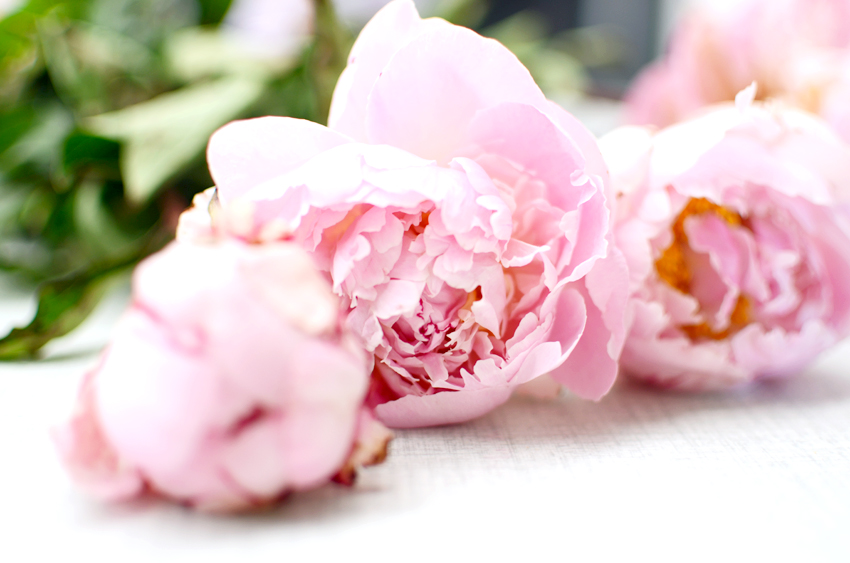 wedding-peonies b