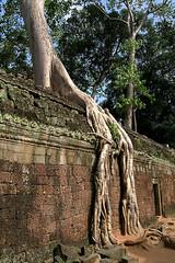 Ta Prohm - Oppressing Tree