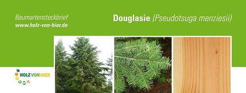 Douglasie-Header