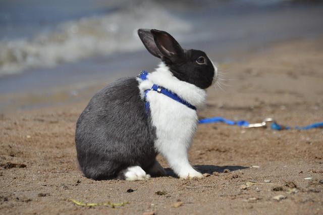 Whisper at the beach
