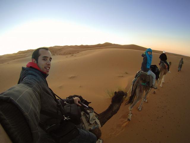 Dromedario por las dunas de Marruecos