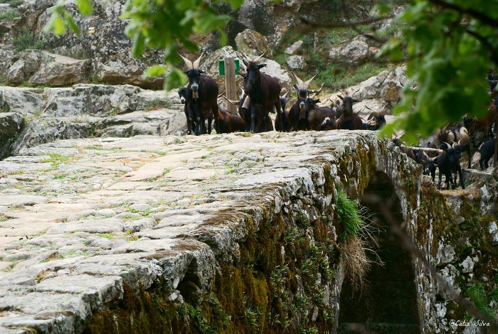 Reserva Natural de la Garganta de los Infiernos_Valle del  Jerte (17)