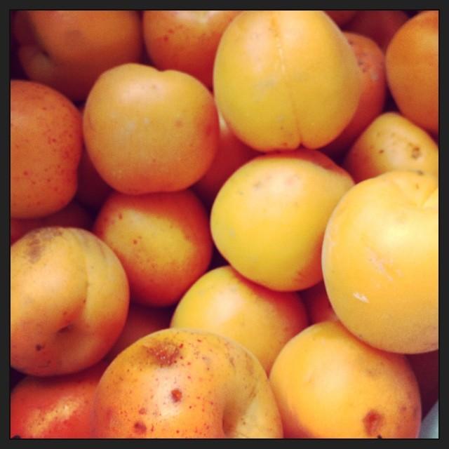 姉が杏と筍を大量に持ってきた