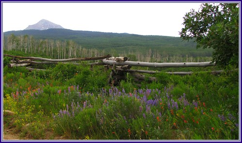 flowers mountains rural fence colorado wildflowers norwood sanmiguelmountains
