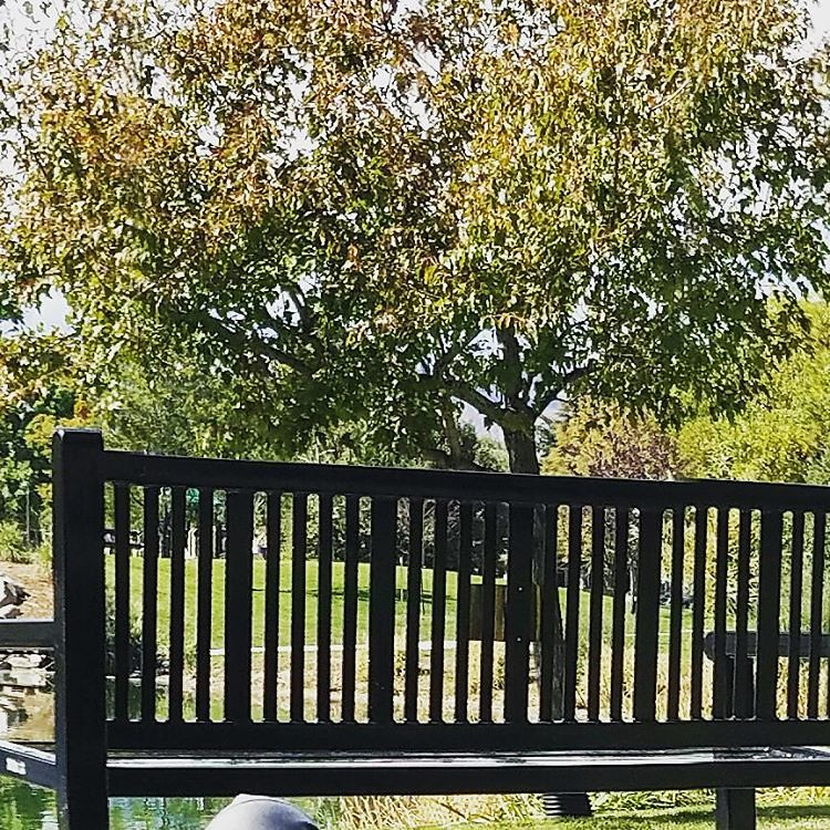 There is something about a #park #bench on a #fall day. #colorfulcolorado #coloradosprings