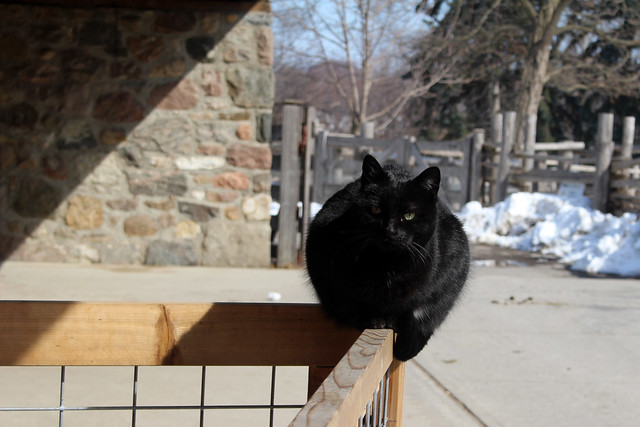Riverdale Farm Cat