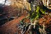 Lago Laudemio - Roots