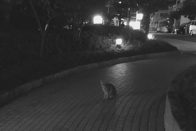 Today's Cat@2016-11-07