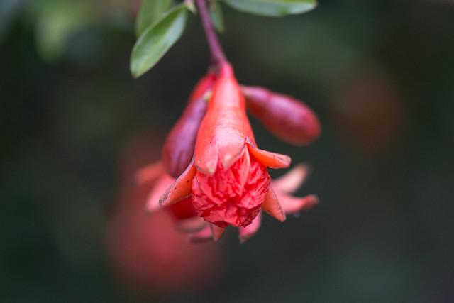 La flor de un, Nikon D7200, Sigma Macro 105mm F2.8 EX DG OS HSM