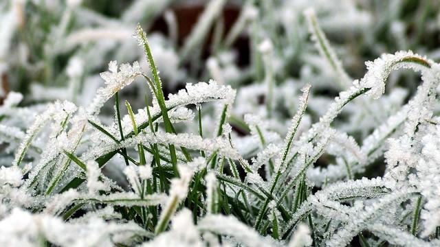 Frosted grass, Nikon D700, AF Zoom-Nikkor 70-300mm f/4-5.6G