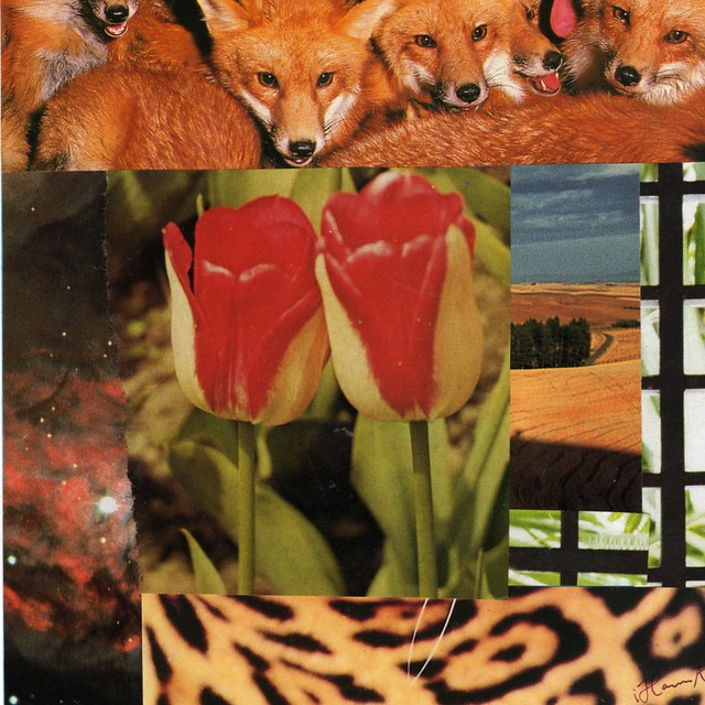 Collage: Foxy foxy