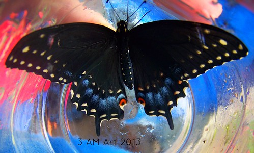 Good Morning, Black Swallowtail