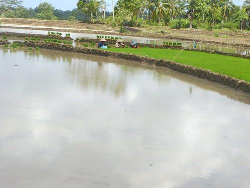 Sulawesi13-Bira-Bone-Kijang (17)