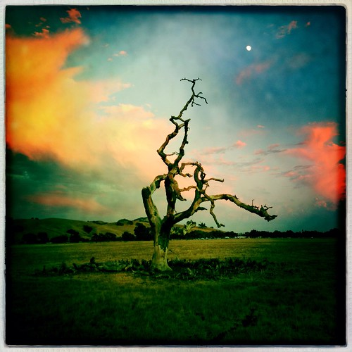 california park sunset moon tree colors clouds square dead pretty sanmartin hollingsworth iphone5 iphoneography hipstamatic harveybearpark oggl uploaded:by=flickrmobile flickriosapp:filter=nofilter