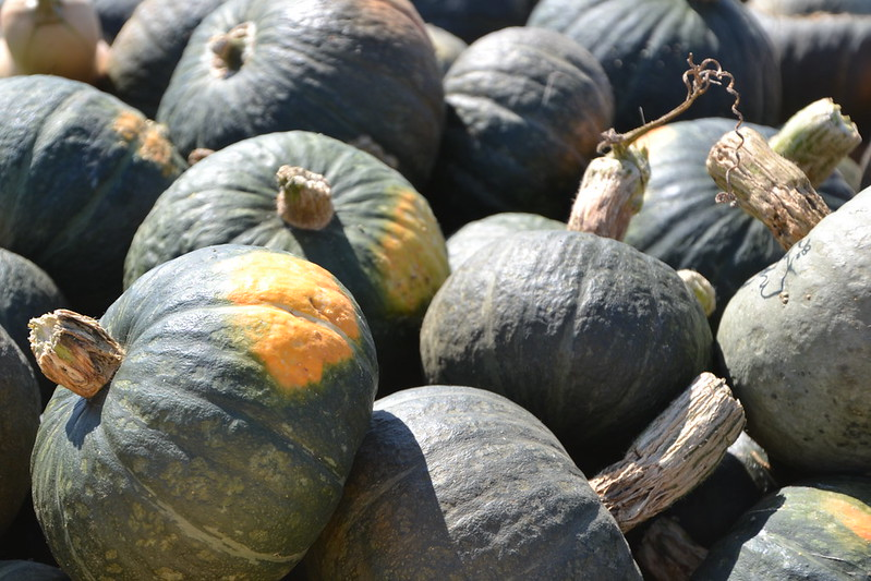 Winter Squash: Green Kabocha