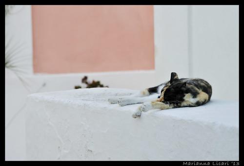 Come dorme bene un gatto by via_parata
