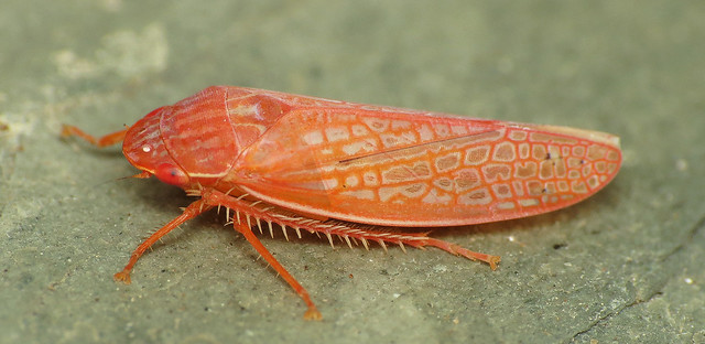 Bug Of The Day Flickr Photo Sharing
